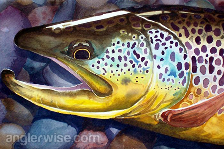 the best fishing lures to catch large brown trout, Fly Fishing Bait