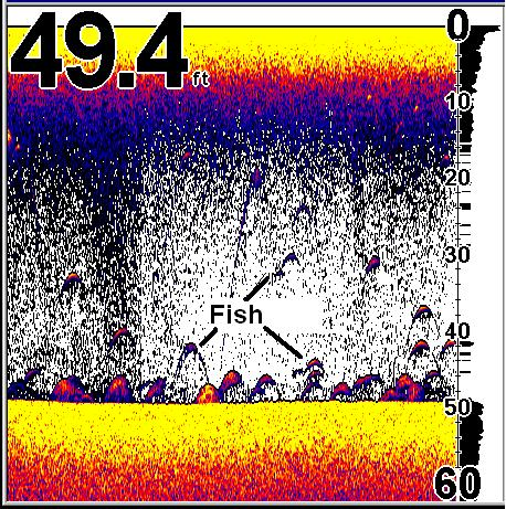 using a fishfinder for walleye fishing - sonar basics, Fish Finder