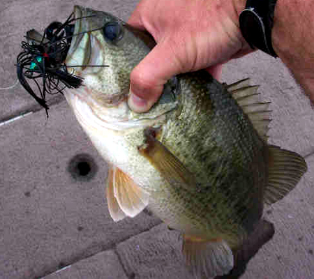 fall jig fishing tips to catch big bass, Hard Baits