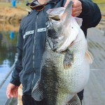 The Real World Record Largemouth Bass