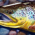 The Best Lures to Catch Large Brown Trout