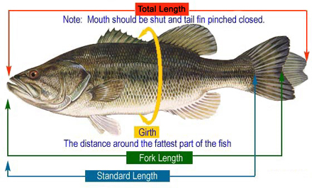 Estimate/Calculate Weight Fish Fishing
