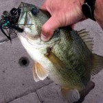 Fall Jig Fishing Tips to Catch Big Bass